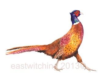 PHEASANT Print, hostess gift, 8x10 print, ready to frame, animal paintings, Christmas bird, watercolor