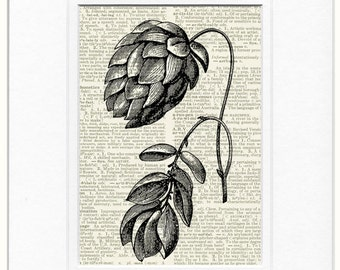 Hops on dictionary page