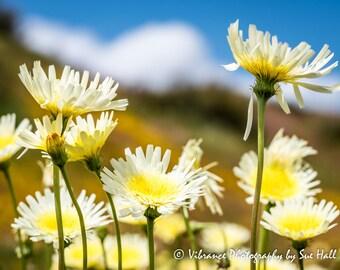 California Wildflowers!
