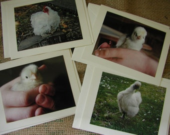 Chicken Notecards - (set of 4)