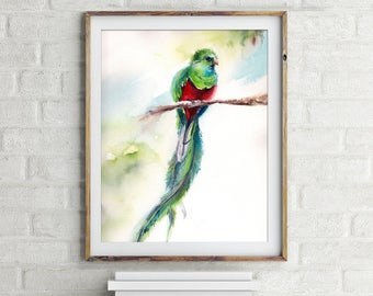 Quetzal Art Print, bird watercolor painting print, bird art, bird wall art print, watercolor print of quetzal bird
