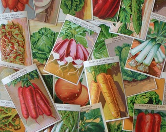 24 Vegetable Seed Packet Labels antique French botanical prints for garden room or kitchen art (Set A)
