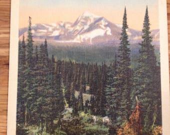 1950's Glacier National Park- Vintage Postcard