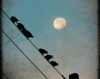 Ready to Fly, birds on a wire, waning moon print, white moon, blue sky photo, textured moon photo, black birds on wire, moon art,