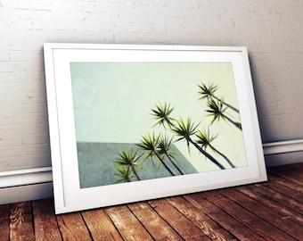mid century modern // minimalist wall art // botanical photography - Palms I, 16x24 photography print