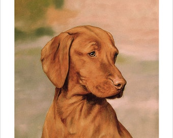 Hungarian Vizsla Dog Portrait. Ltd Edition Print. Personally signed and numbered by award Winning Professional artist JOHN SILVER. jsfa011