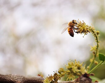 Bee Among the Flowers Digital Download Photogarphy Picture Wall Art Home Decor