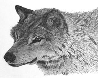 Pen & ink drawing - Grey Wolf