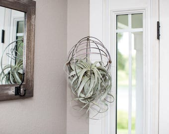 Hanging Metal Sphere with Air Plant