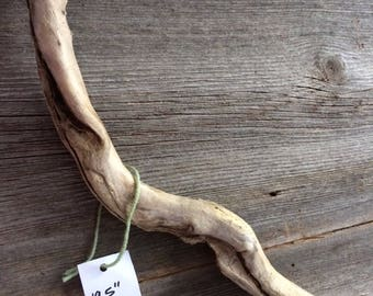 One of a kind driftwood from The  GreatMississippi River Valley