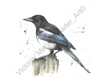 Watercolour & Pencil MAGPIE Print A4 By VMS (From Original Artwork)