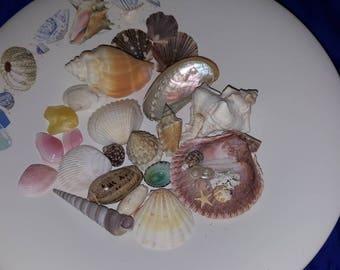 Colorful Sea Shell Lot 1