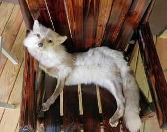 REJECT/DAMAGED Snow Glow Fox Soft Mount