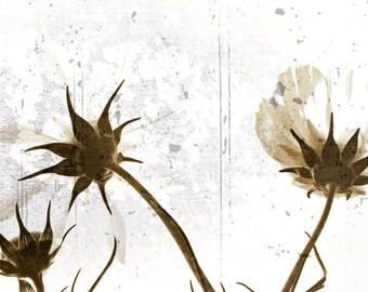 Sepia Floral Photograph Beckoning Flower Texture Minimalist Cosmos Garden Dreamy Fine Art Nature