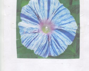 24-Venice Blue - morning glory seeds -bright large 3-4 in. blooms -for spring 2018 planting-....check out free seeds ....