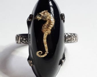 Expandable Vintage Real Seahorse in Perspex Ring, c.1970s.