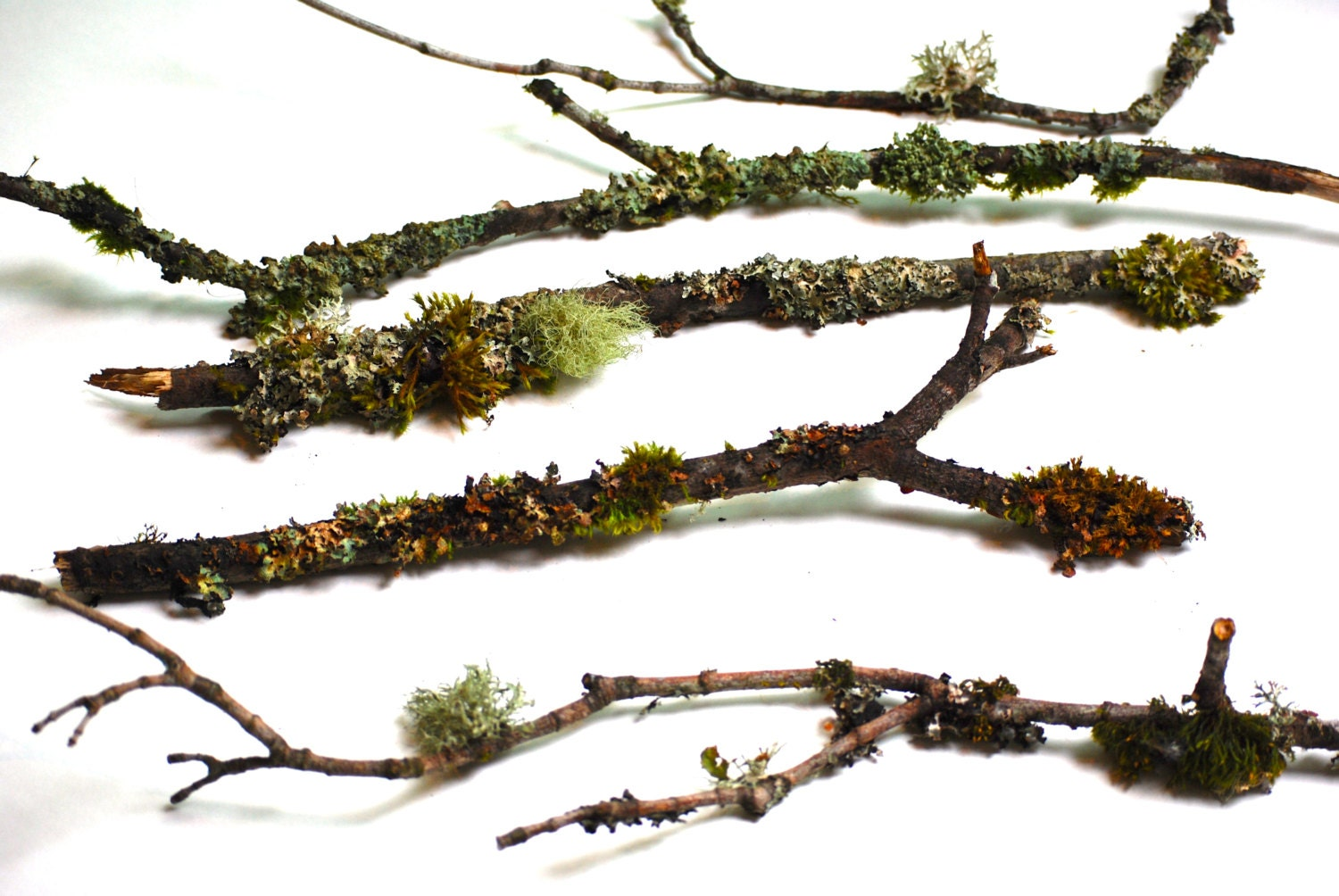 5 Branches & Twigs Covered in Natural Lichen and Moss, Bonsai Rustic ...