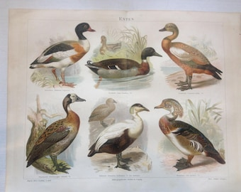 """Lithography, """"Ducks""""."""