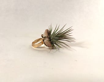 Living Air Plant Geode Ring