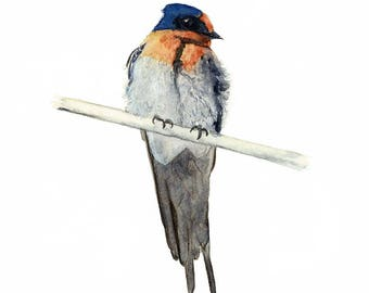 Welcome Swallow Fine Art Print A3, Australian Fauna, Swallow Watercolour, Native Bird Wall Art