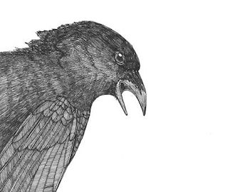 crow tells you what's what ORIGINAL artwork bird illustration ink on paper 6 x 6