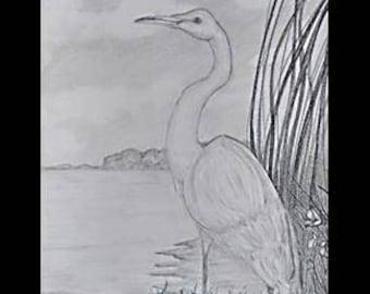 """original artwork, OOAK, graphite """"Heron"""""""