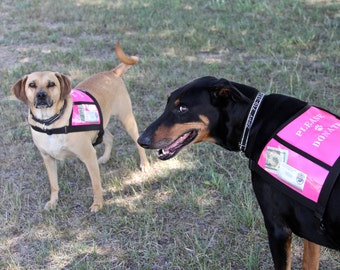 Custom made FUNDRAISING DOG VEST with large clear pockets for donations - you choose color and size
