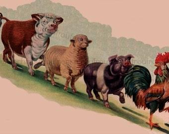 vintage farm animals rooster pig cow sheep illustration digital download