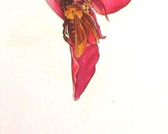 Flower Print - Impatiens Roylei, Sweet Garden Violet - 1940 Vintage Print - Botanical Print