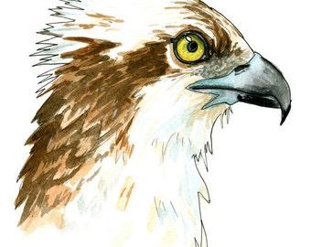 Osprey Print - Watercolor Art - Bird Of Prey - Bird Art - Sketch - 5 x 7, 8 x 10, and 11 x 14