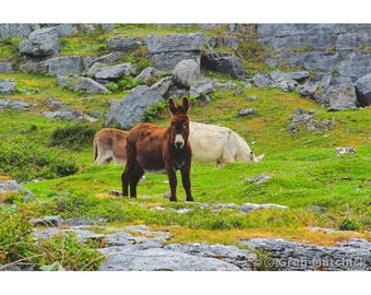 Fine Art Color Photography of Donkey on the Burren in County Clare Ireland