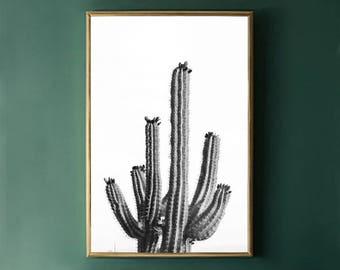 Desert Cactus Art Print, Black and White Print Photography Download, Large Cactus Print DIGITAL PRINT Nature Photography Digital Download