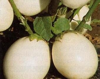 Ornamental Eggplant Vegetable Seeds/Solanum Melongena/Annual   40+