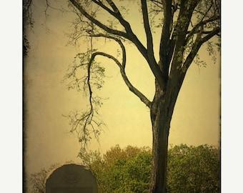 25% Memorial Day Sale Gettysburg photo memorial Tree photograph, home decor, landscape photography