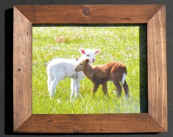 Rustic Framed Sheep Photos, Country Farm Sheep Photographs in Rustic Brown Frame, Original Sheep Lamb Pictures in Handmade Pine Wood Frame