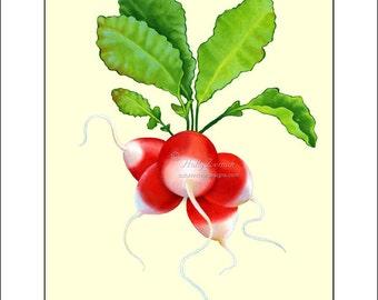 Radishes #1  - Archival Giclee Print of my original oil painting, Art Print, Giclee, Holly Zemak, Radishes, Vegtables, Garden, Red, Green