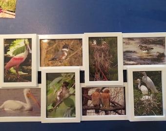 Original Nature Photos in 8-Picture Collage