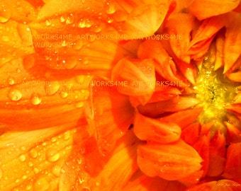 Orange Dinner Plate Dahlia!, Digital Photo/print  many copies