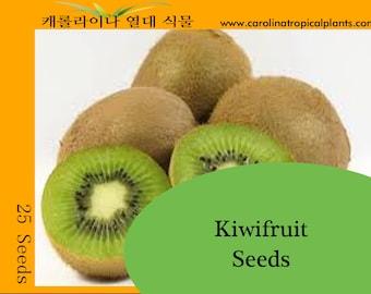 Kiwi Seeds (Actinidia deliciosa) - 25 Seed Count