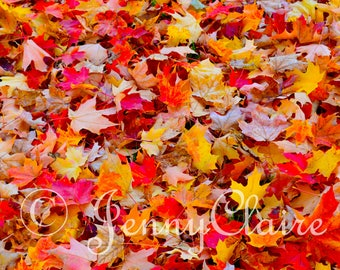Colours of fall, digital download photography of autumn leaves