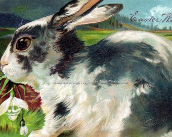Easter Bunny Card - Rabbit w Snowdrops - Vintage Style Repro Greeting Card