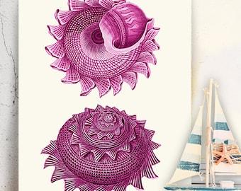 Pink sea shell print Duo 2 pink wall art pink art seashell art print seashell print Nautical print Bathroom wall art pink bedroom wall art