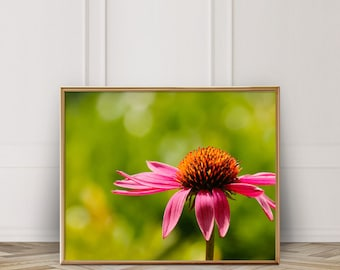 Coneflower Photo - Digital Download - Instant Download - Printable Photography - Sunset- Macro Photo - Pink Flower - Nature Art