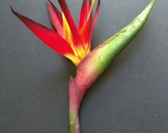 "31"" bird of paradise tropical stem"