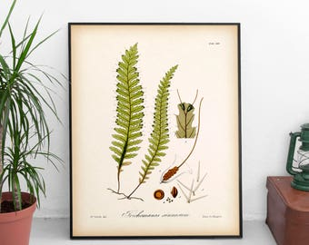 Fern art, Antique fern illustration, Instant download fern print, Fern printable, Botanical illustration, Vintage botanical, 8x10, 11x14 JPG