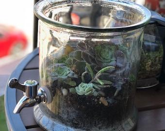 Glass Jug Succulent Terrarium