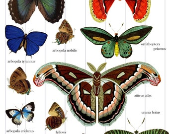 12 Butterfly and Moth Graphic Digital Images and Collage Sheet Commercial Use Print or Web Instant Download