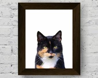 cat photo, animal print for nursery, pet portrait photography, wall art print, kids room large poster, printable artwork, digital download