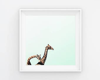 I'll Stand By You V Giraffes Photography Print