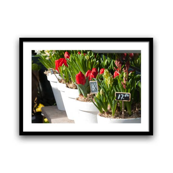 Spring Decor, Tulip Photograph, Red Wall Decor, Flower Photograph, Rustic Wall Art, Floral Photo